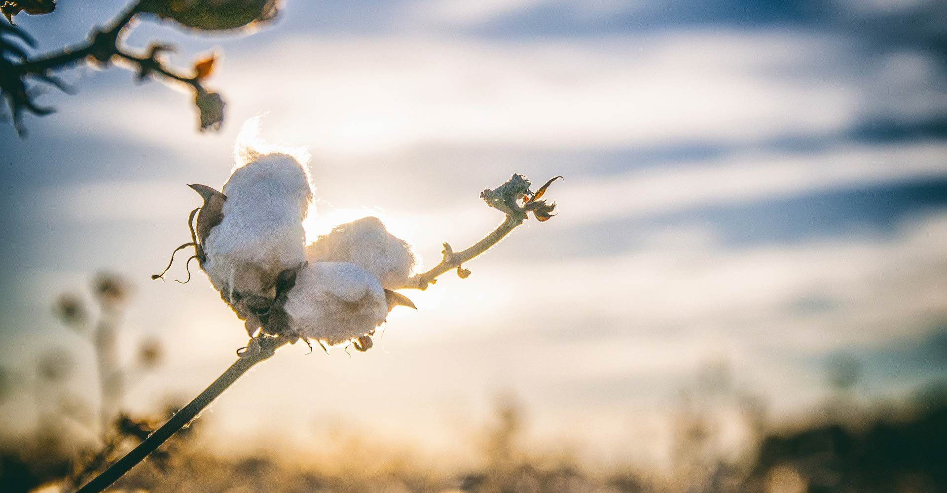 Pima Cotton babies and children clothing manufacturer in ...